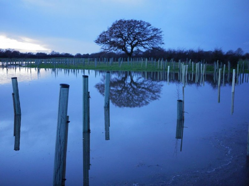 Is it as simple as planting trees to reduce flood risk?