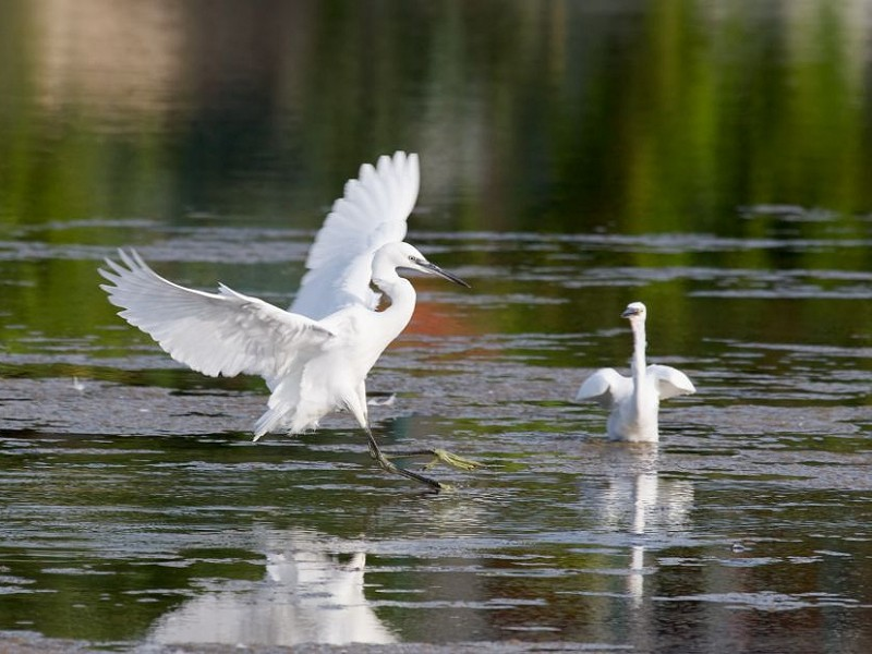 The life aquatic - How wetlands can help reverse climate change