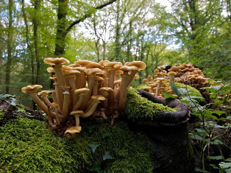 The Secret World of Fungi