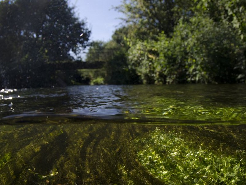 Sussex Wildlife Trust responds to news of Ofwat penalties for Southern Water