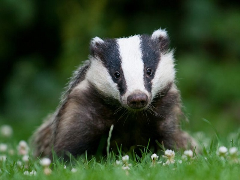 Huge disappointment at limitation of Bovine TB Strategy Review led by Sir Charles Godfray