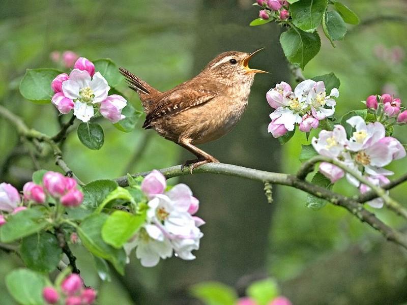 Awakenings: Celebrating 60 years of the Sussex Wildlife Trust