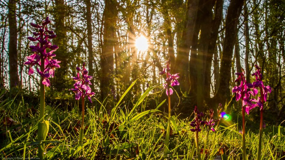 Antisocial behaviour on nature reserves - how you can help