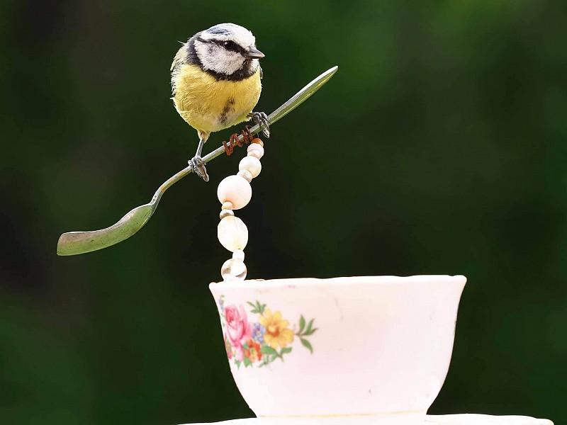 Window on Wildlife: garden birds