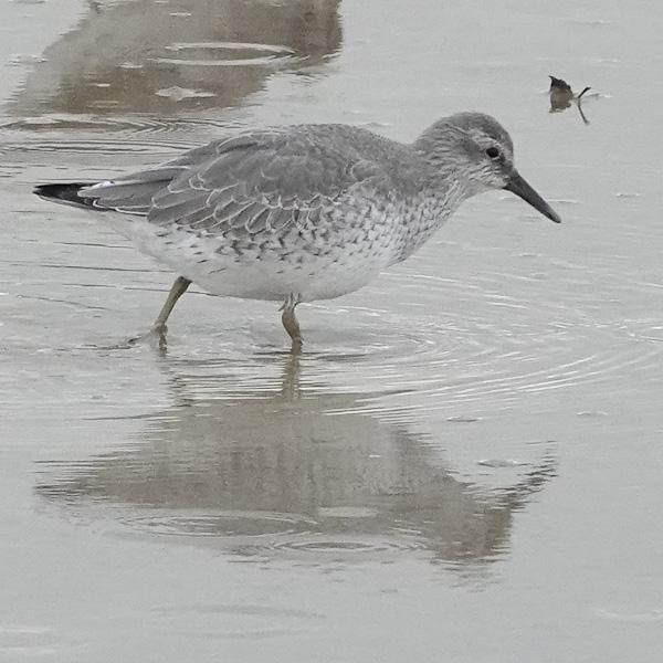 January 2020 - Rye Harbour wildlife