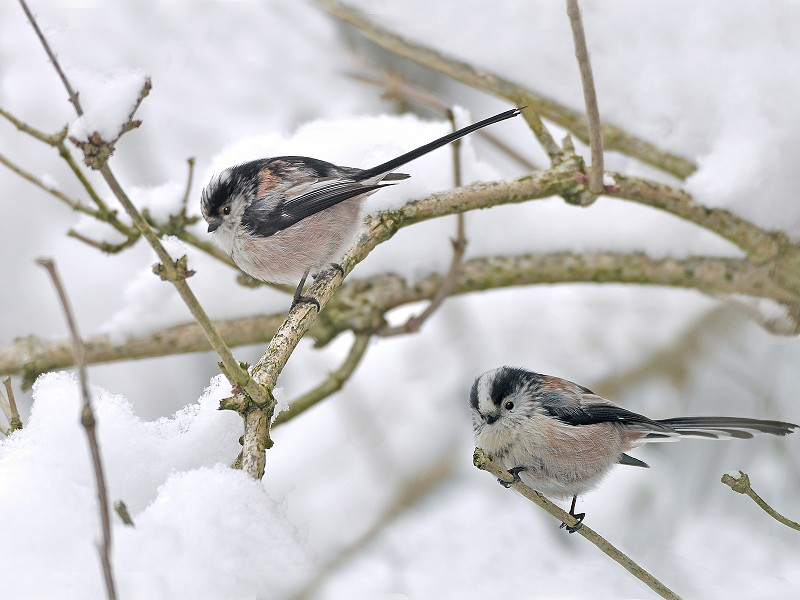 Season's Greetings from Sussex Wildlife Trust