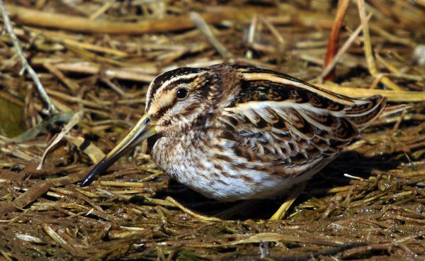 February 2021 - Rye Harbour Nature Reserve Sightings