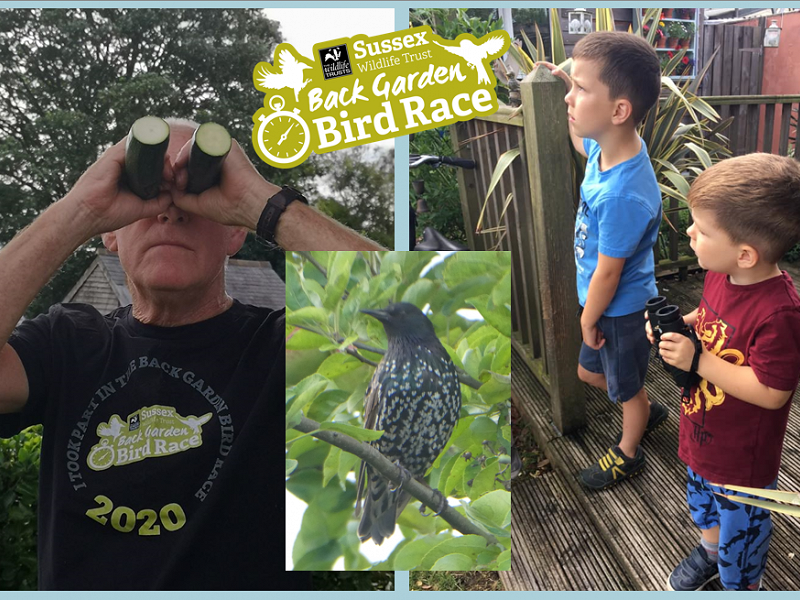Back Garden Bird Race - July results