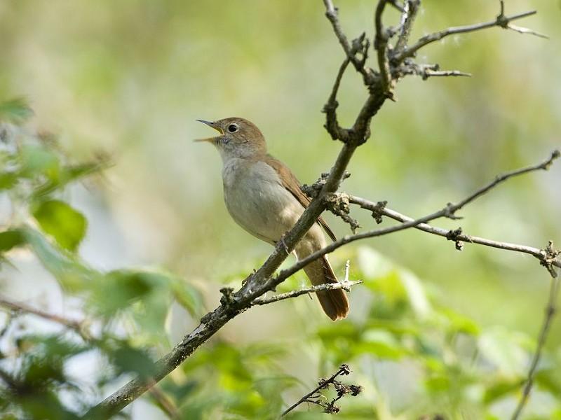 Corona Wildlife Diary: Day Ninety-four