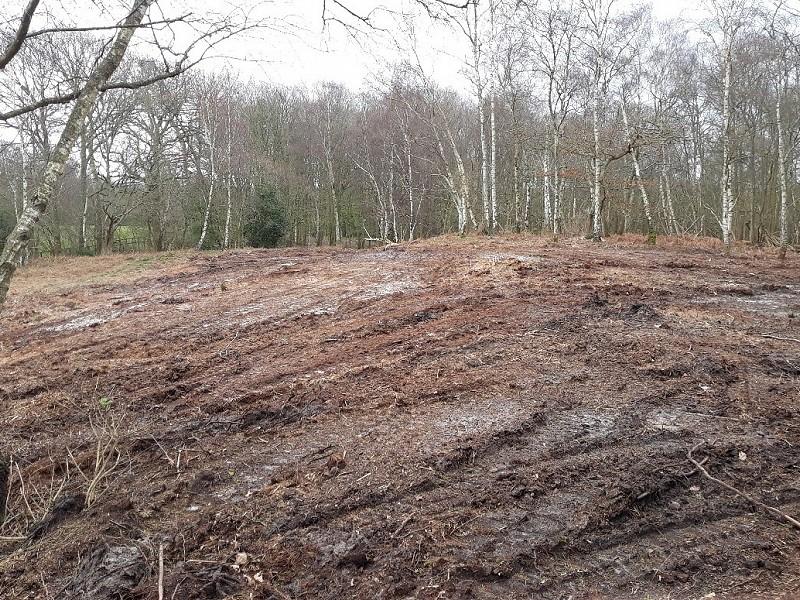 Habitat restoration at Burton Ponds - update