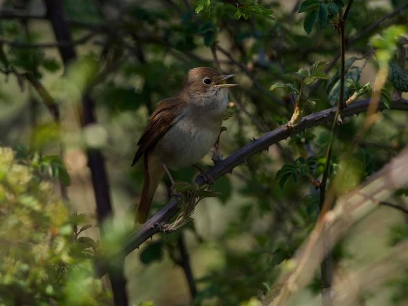 Nightingales, grumpy wood mice and money spiders