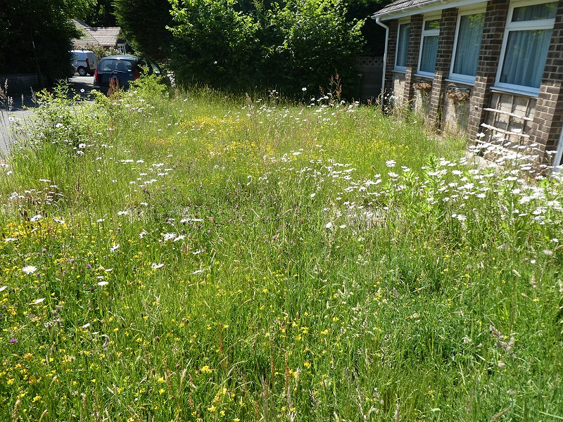 Creating a Wildflower Meadow in your Garden