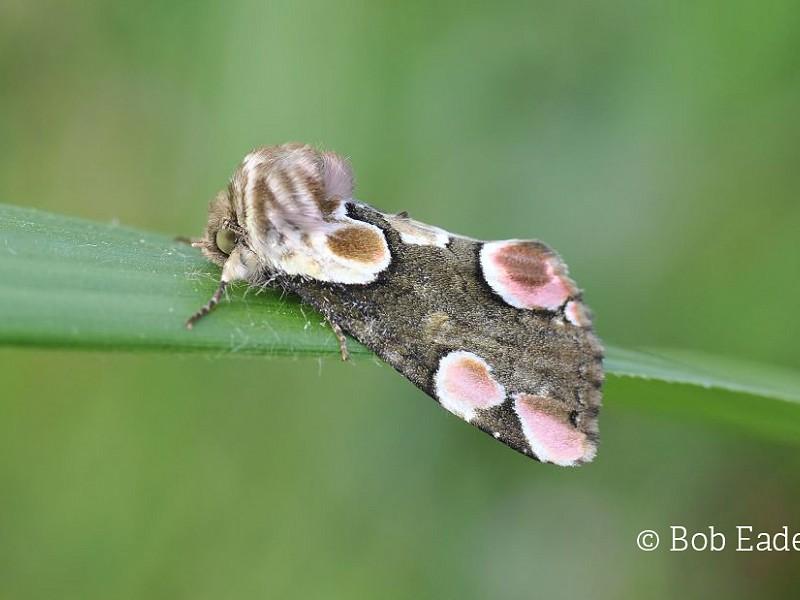 Naming of moths