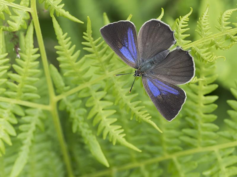 The Butterflies of Billingshurst