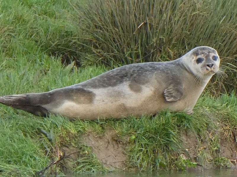 Seal Spotting in Horsham District