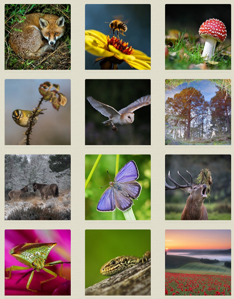 Wildlife photography competition - now it's over to the public vote