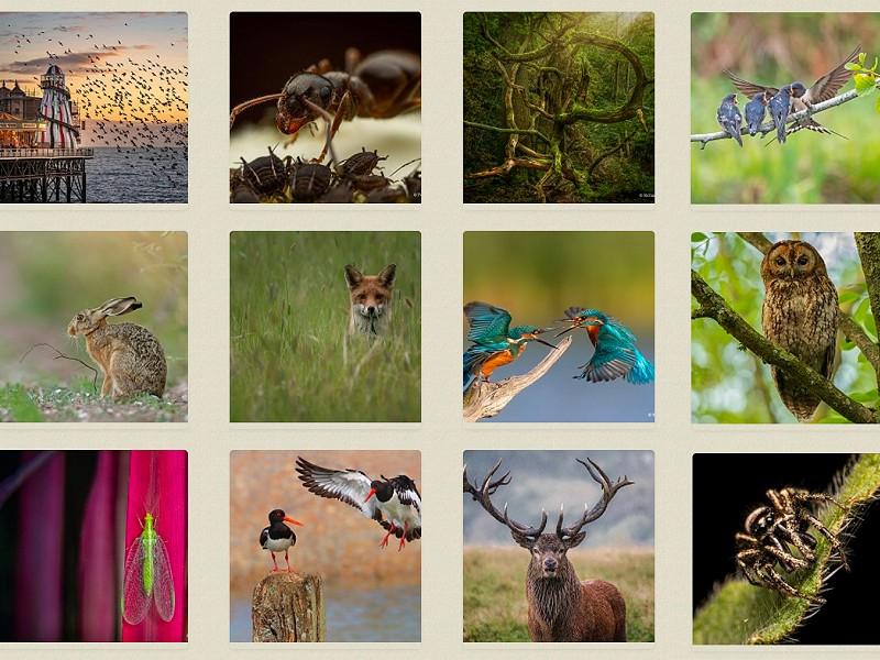 Into the Wild photo competition - public vote open