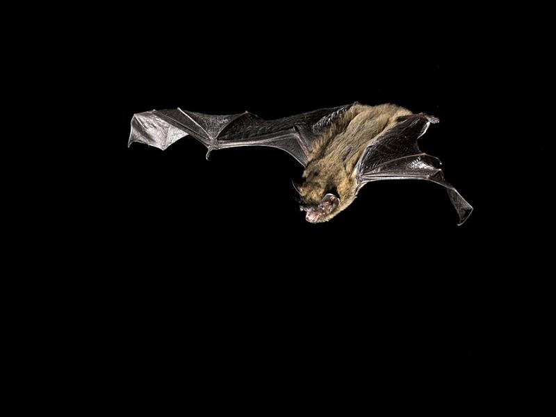 Going Bats in Sussex