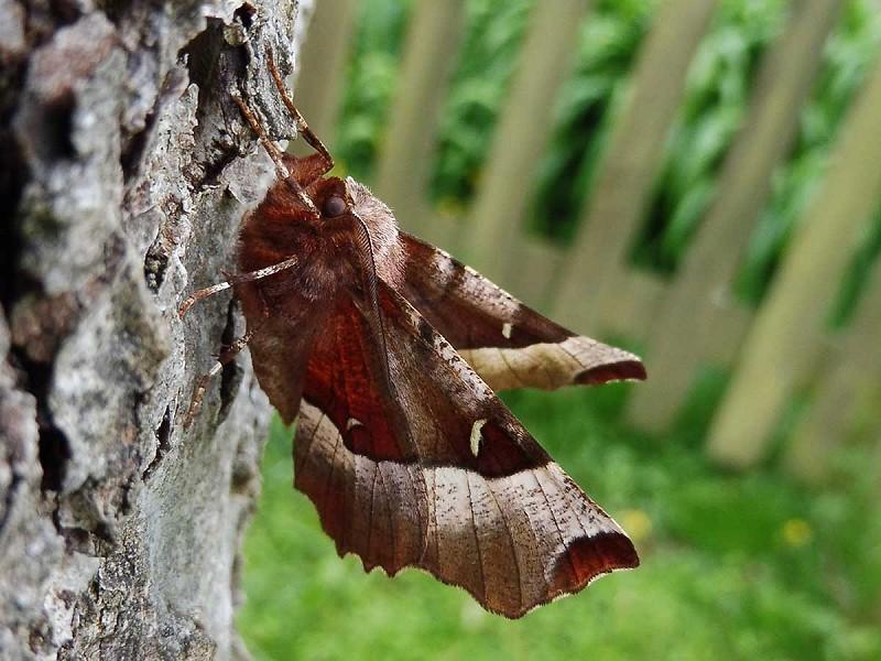 Moth Blog 2