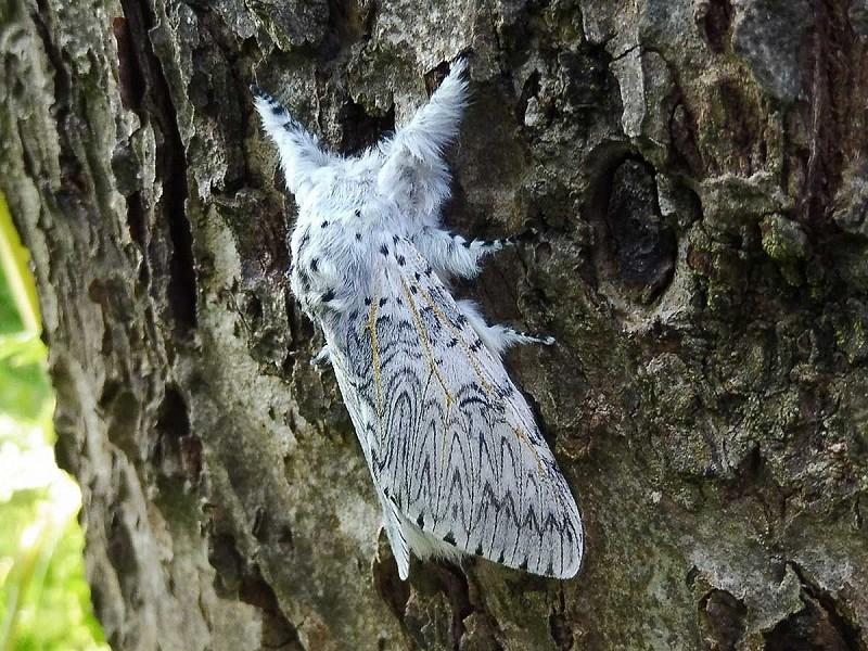 Bob Foreman's Moth Blog