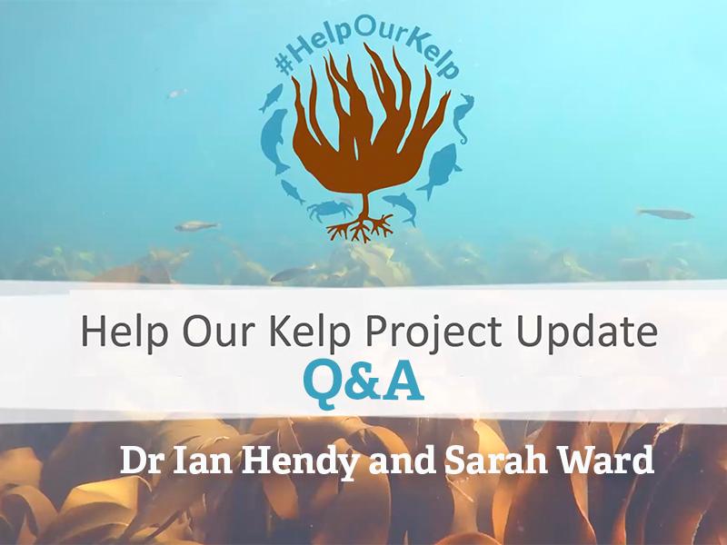 Help Our Kelp Q&A