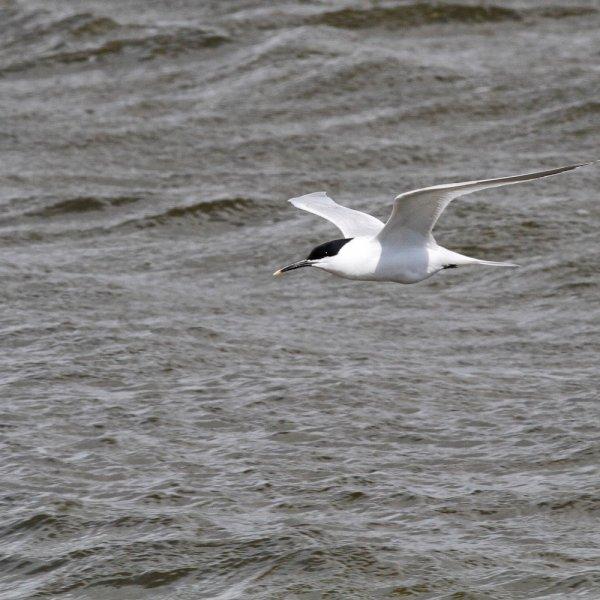 February 2020 - Rye Harbour wildlife