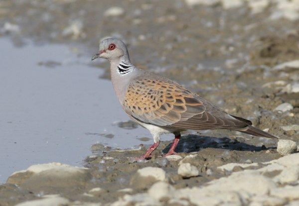 June 2019 - Rye Harbour Nature Reserve Sightings