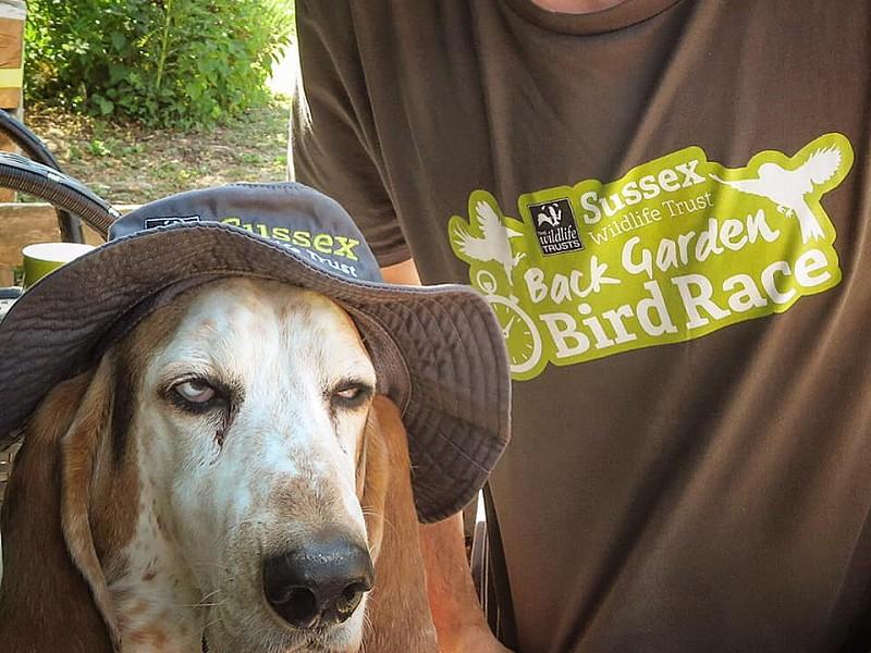 Corona Wildlife Diary: Day Seventy-five.