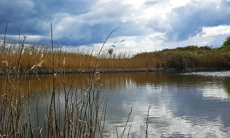 Immersive soundscapes from Rye Harbour Nature Reserve