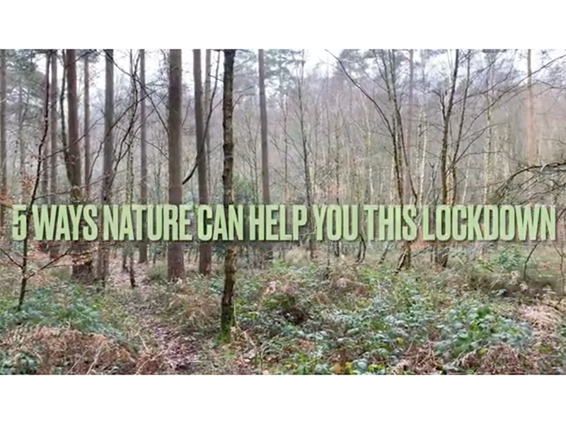 Five ways nature can help you during lockdown