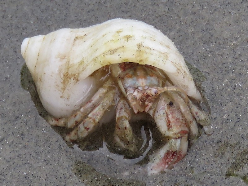 Ideal Home: Hermit Crab