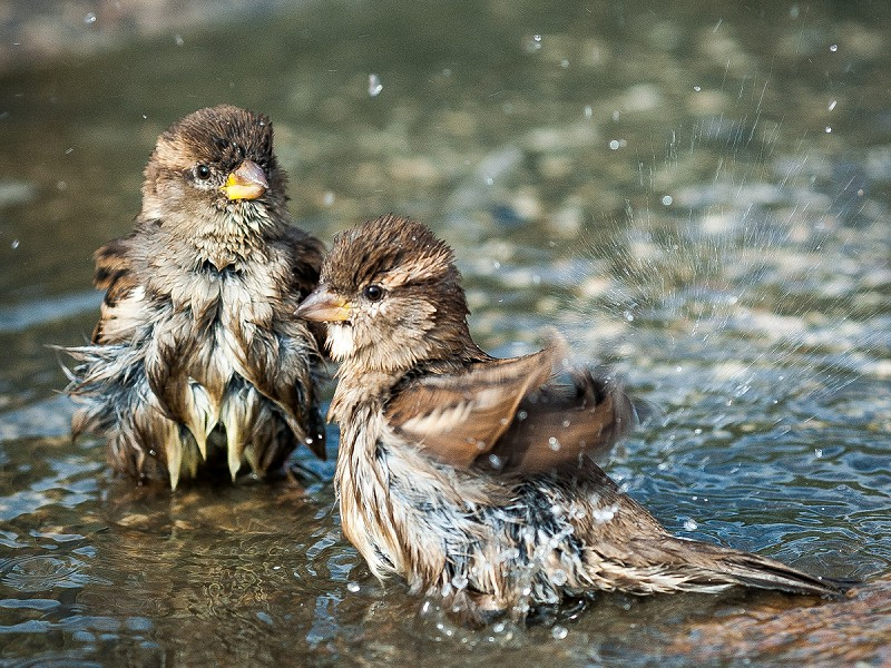 How to help wildlife during the heatwave