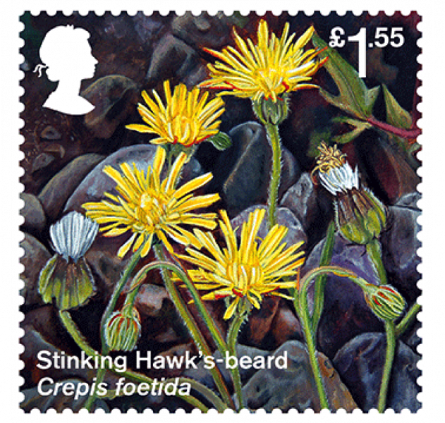 Rare plant to feature in Discovery Centre Garden honoured by Royal Mail stamp
