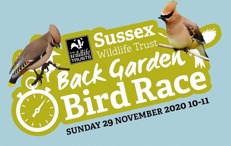 The Back Garden Bird Race returns (Sunday 29 Nov, 10-11)