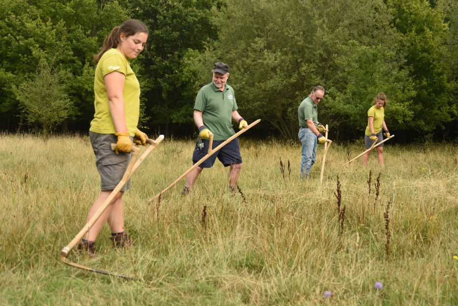 Volunteers and Land Management Trainees Scythe Grass©Miles DaviesSussex Wildlife Trust