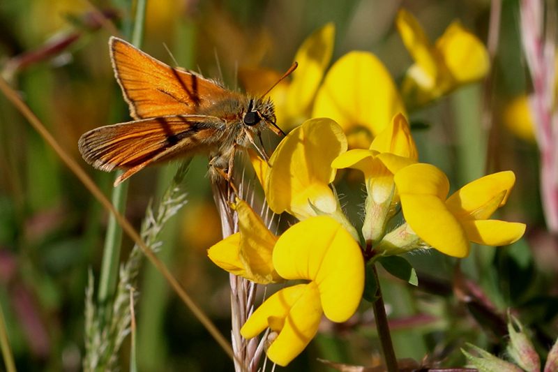 Martin Kalaher's butterfly garden