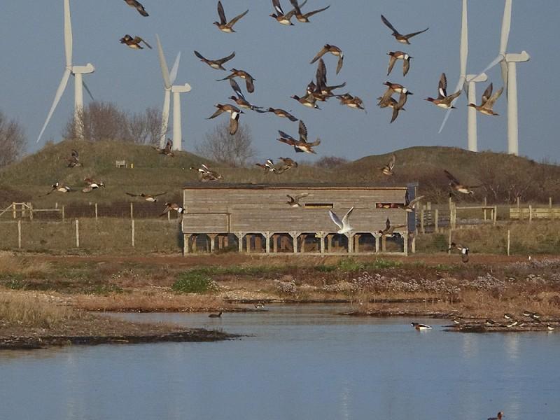 Rye Harbour Wetlands