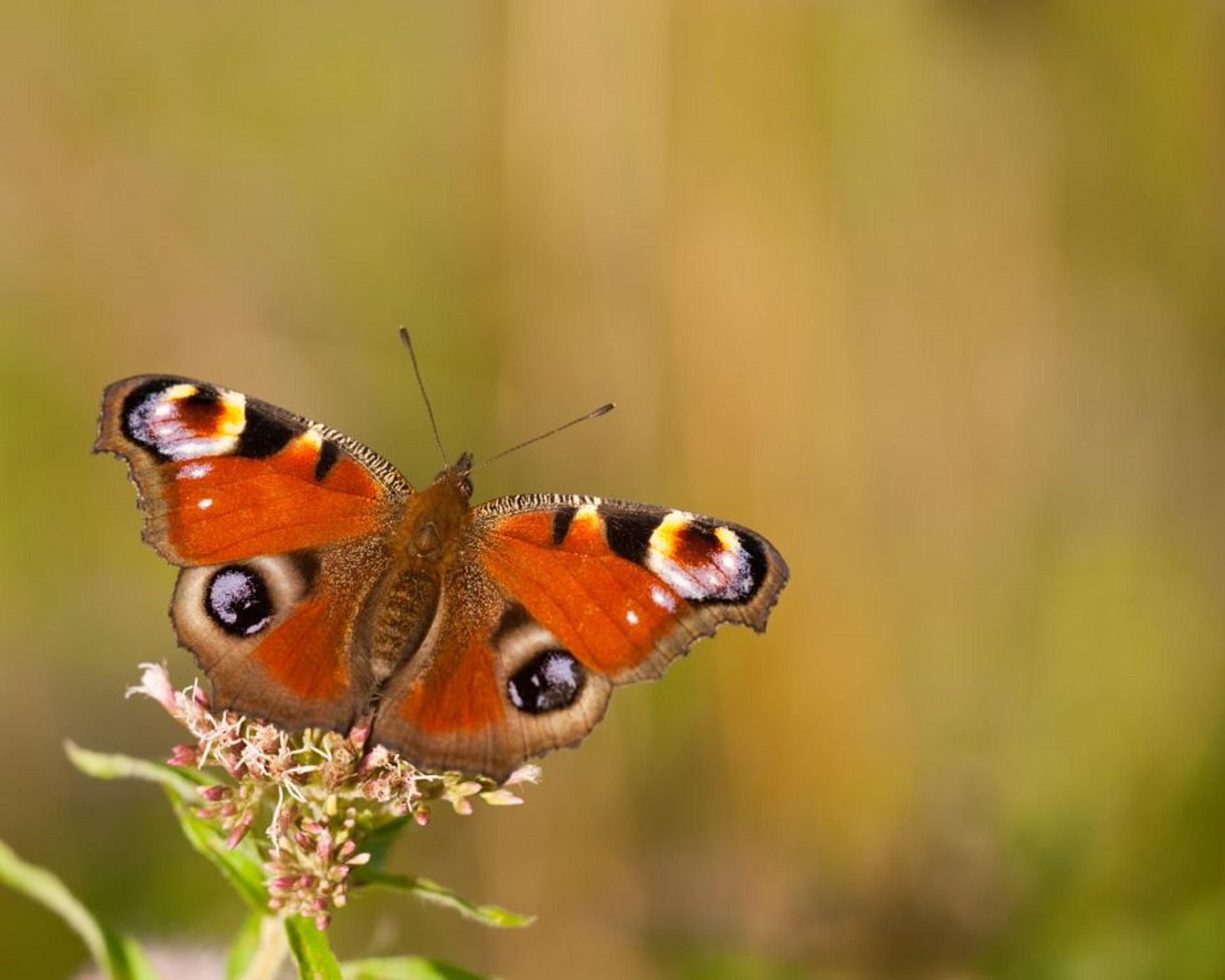 Ten Garden Moths To Spot Sussex Wildlife Trust