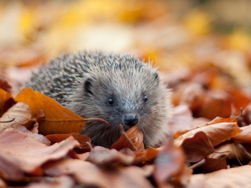 Remember, remember wildlife this 5th of November