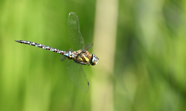 Butterflies & Dragonflies at Woods Mill - Henfield
