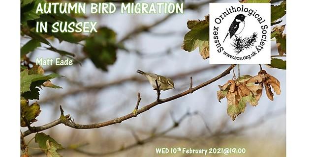 Autumn Bird Migration in Sussex