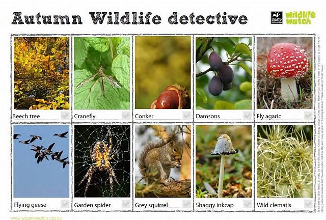 Autumn Wildlife SpottingSheets(1) 2