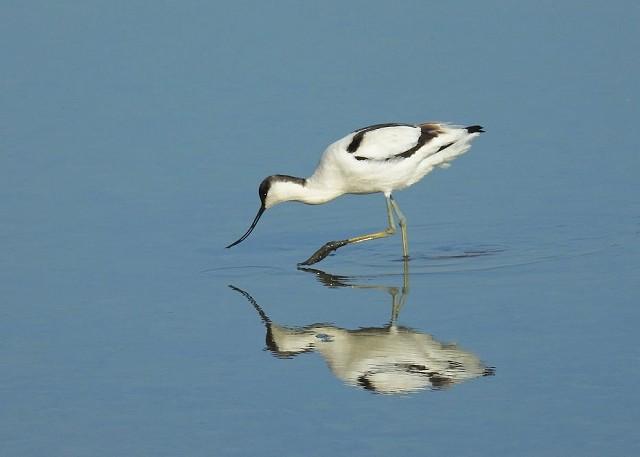 Saltmarsh Birds - Sussex Wildlife Trust Members Only Event (09/03/2019)