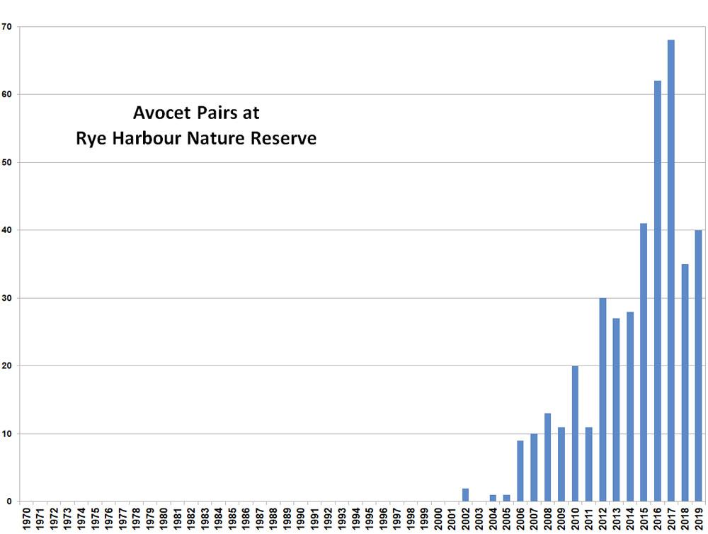 Avocet graph