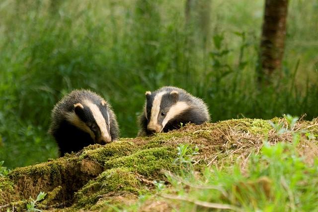Wildlife Rangers- Brighton