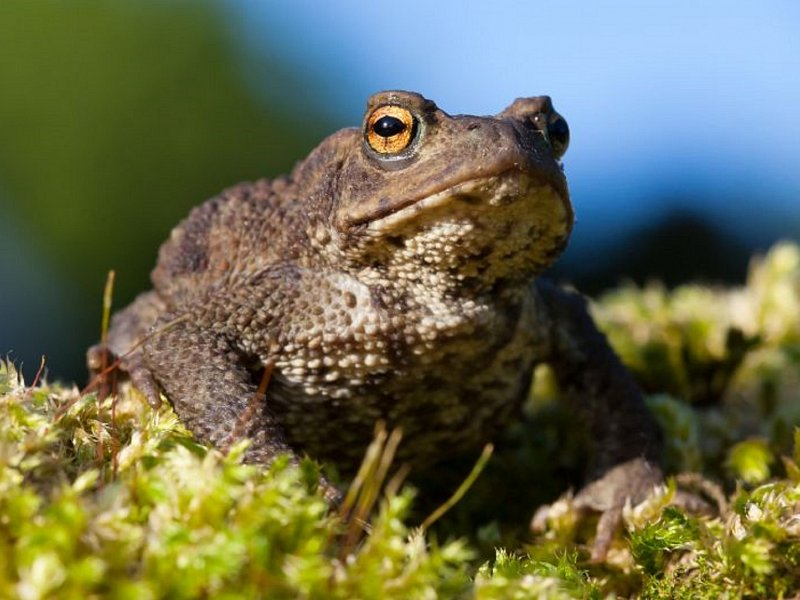 Toads on the move