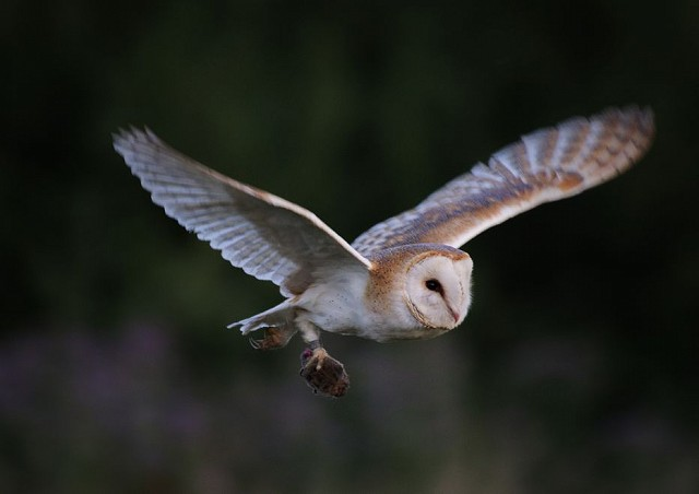 Owl Walk at Woods Mill - Henfield (27/08/19)