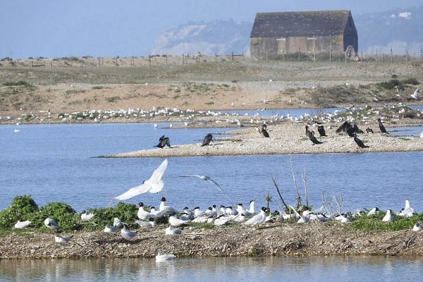 Discover Rye Harbour Nature Reserve