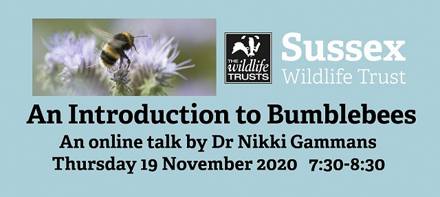 An Introduction to Bumblebees with Dr Nikki Gammans