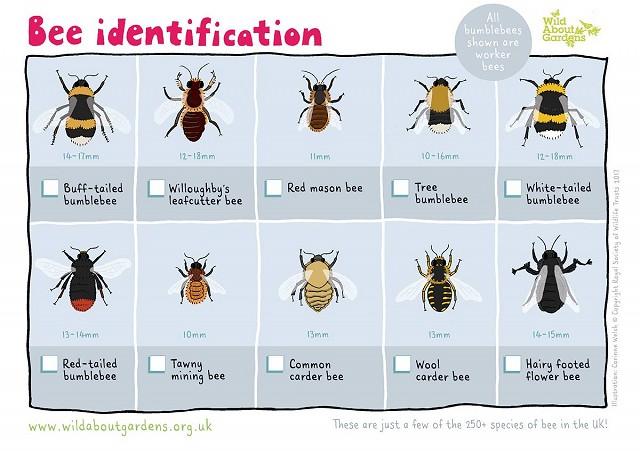 Bee identification (4)